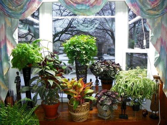 Выращиваем комнатные цветы